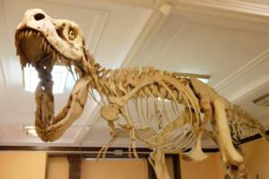 szkielet dinozaura w Muzeum Ewolucji Instytutu Paleobiologii PAN jako pomysł na weekend z dzieckiem w Warszawie