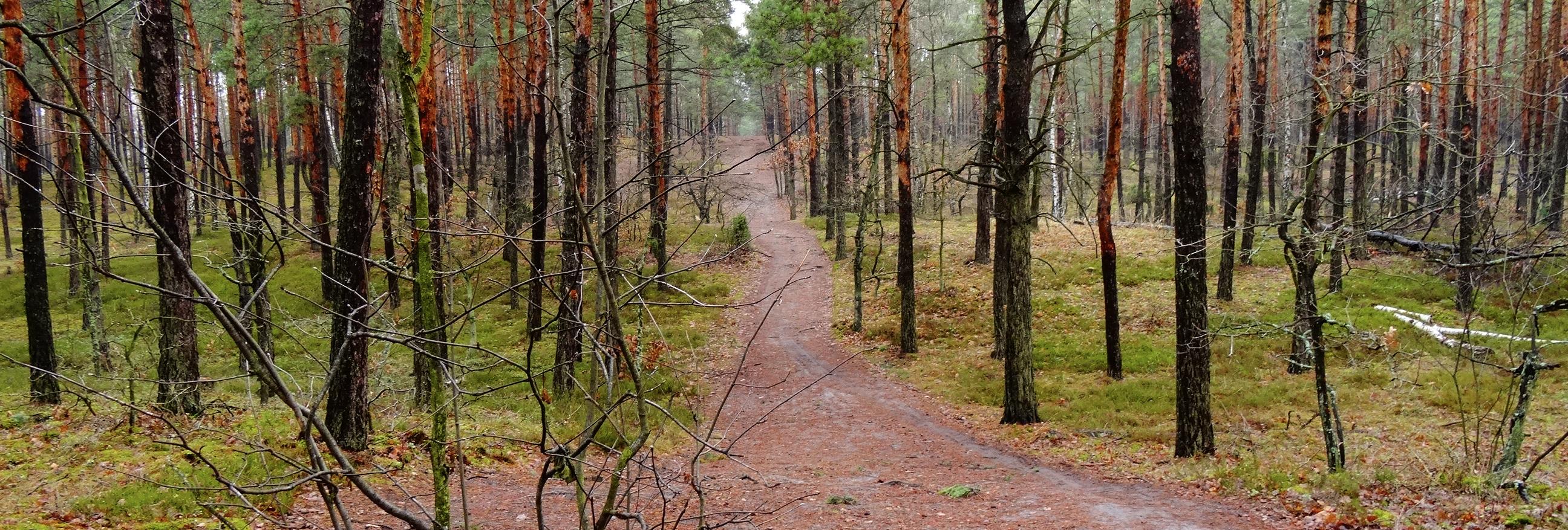 orientacja w lesie