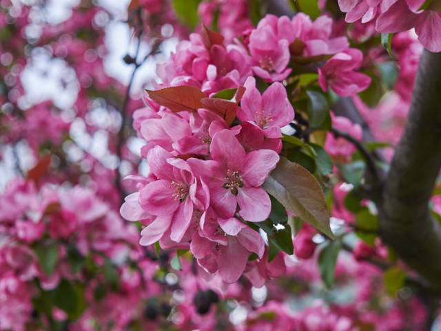 kwiatki-_7