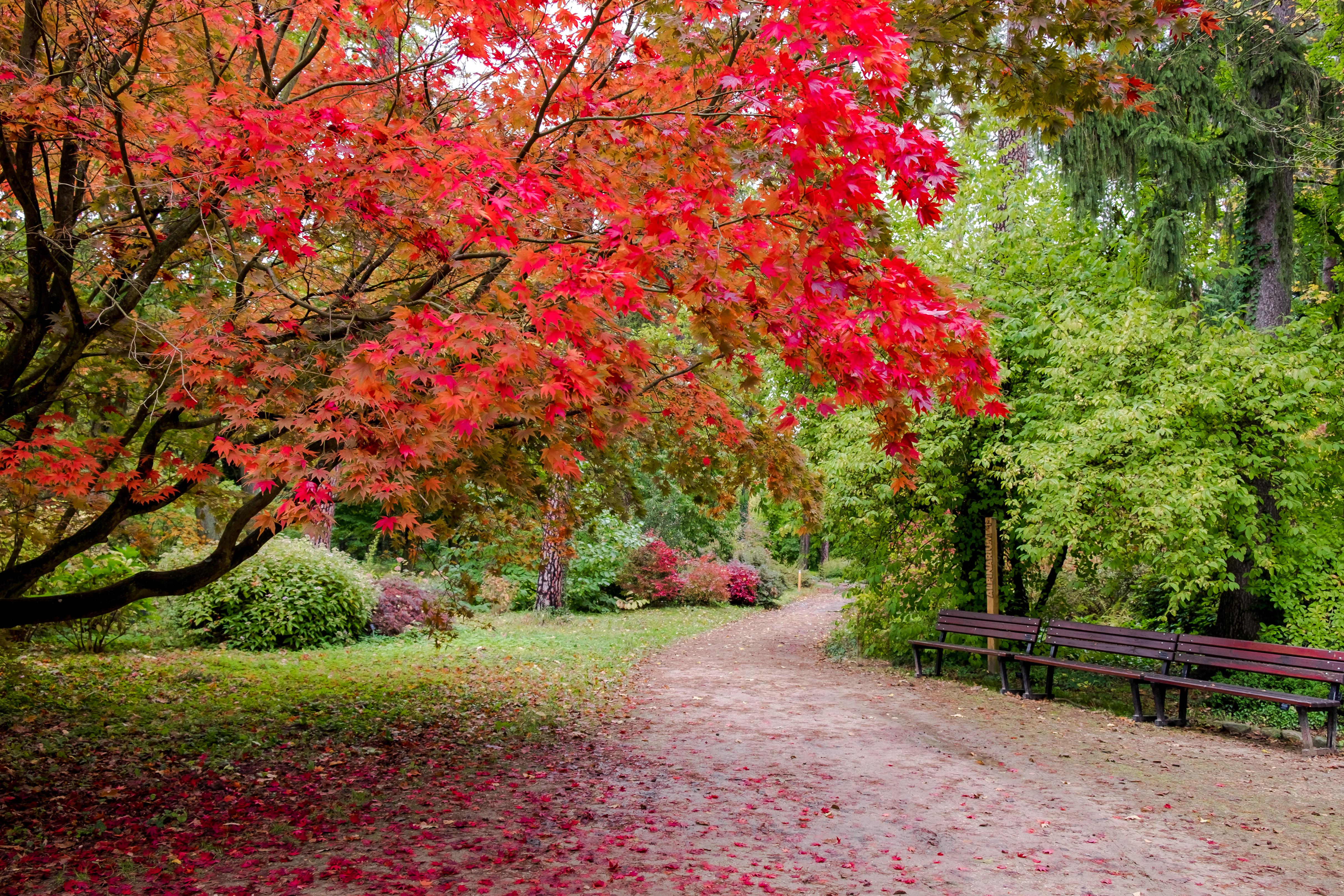 arboretum zdjecia -2